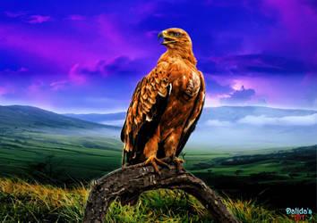 Eagle by makiskan