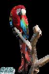 Macaw Parrot by makiskan