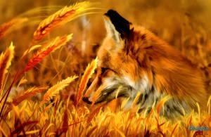 Red Fox (2) by makiskan