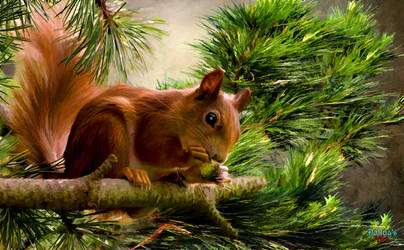 Squirrel In The Forest by makiskan