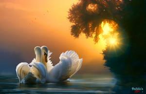 The Dance Of Swans by makiskan