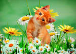 Cute Kitty