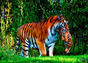 Tiger cub with tigress