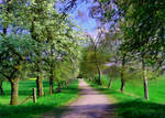Pathway In Landscape