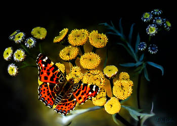 Butterfly by Dalidas-Art