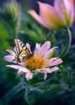 Spring-Butterfly-Flower