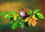 Bird On Rose