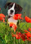 Puppy by Dalidas-Art