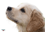 Dog Face PNG