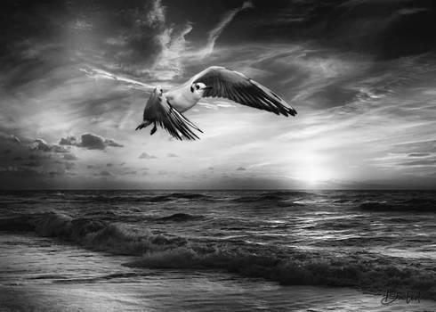 Seagull On Beach - Bw