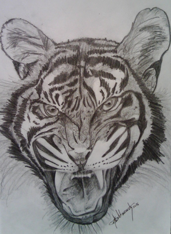 The Tiger - sketch by Moreirarty