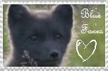 Blue fox stamp by Iamlayla