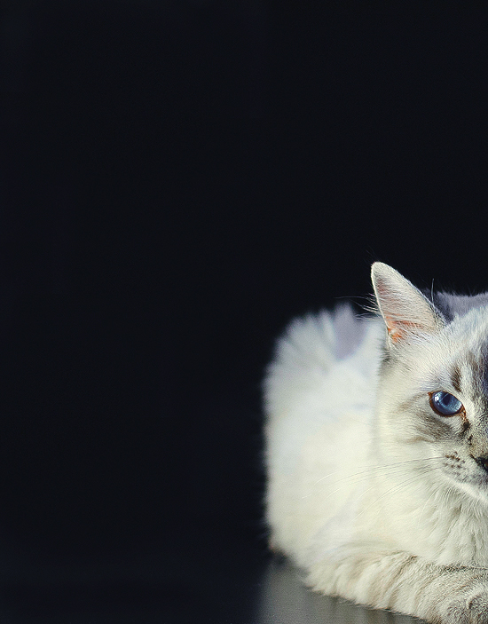 Catching the cat pt. III Black by SaiuPetauro
