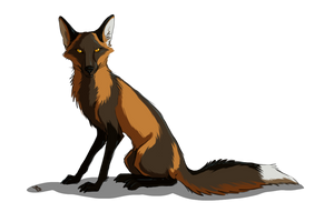 Foxy traveler