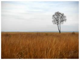 Lonely tree by hawkeye280