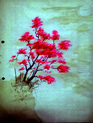 Sakura by mndhta