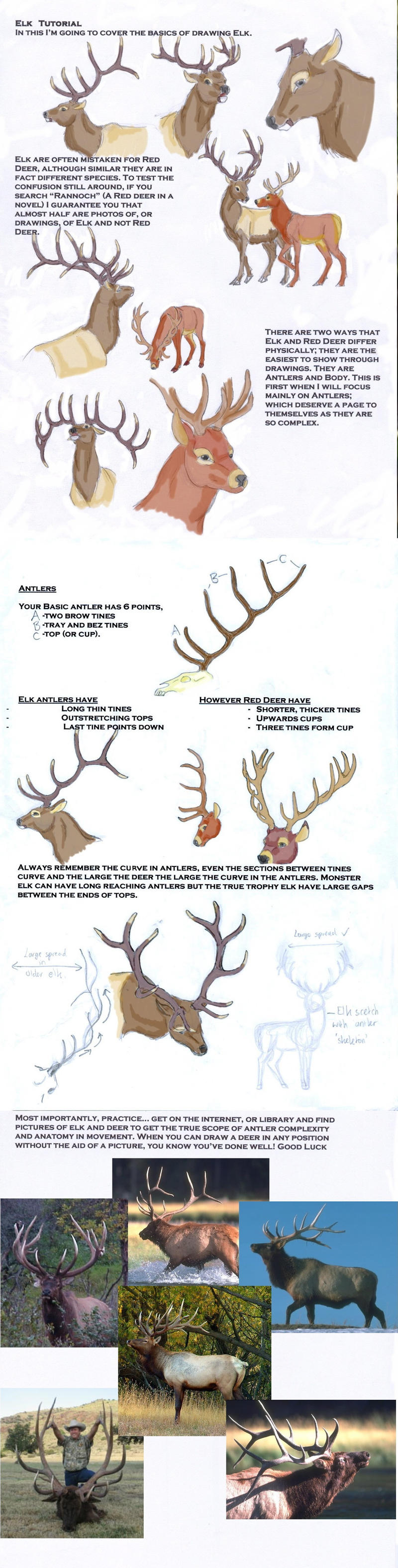 Elk Tutorial by LeeDassin