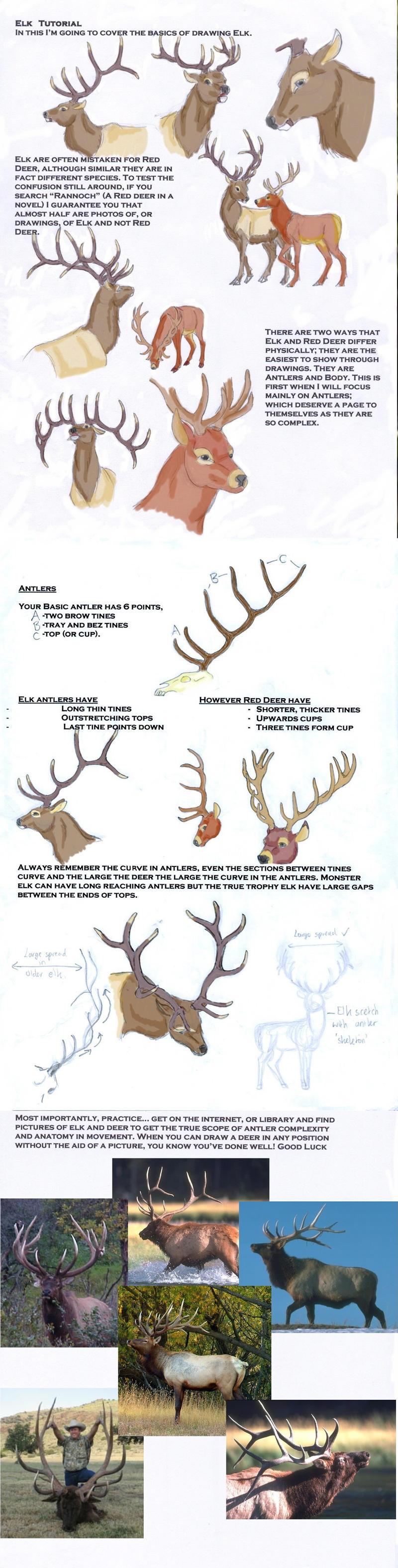 Elk Tutorial by LeeDassin