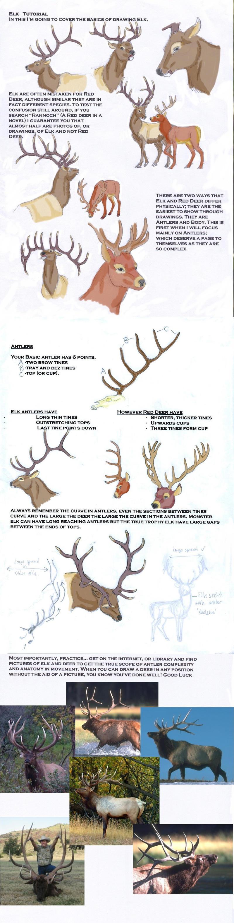Elk Tutorial by LeeDassin on DeviantArt