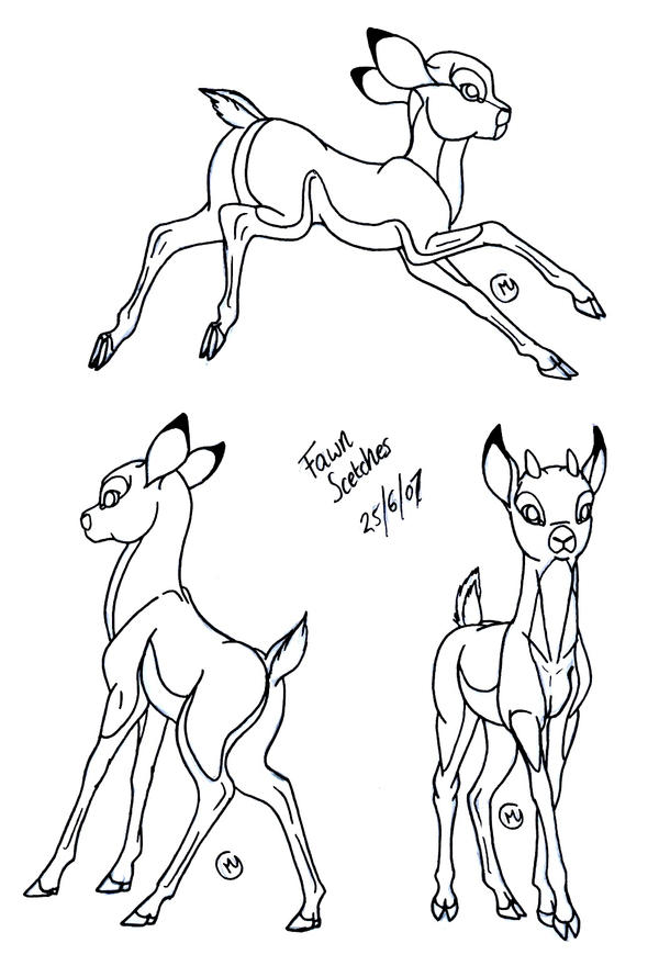 fawn sketches by leedassin