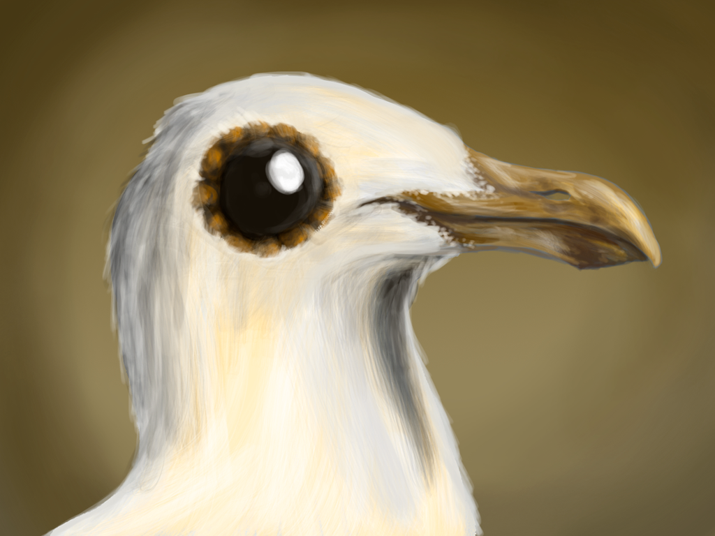 Seagull-eyes by Absalem