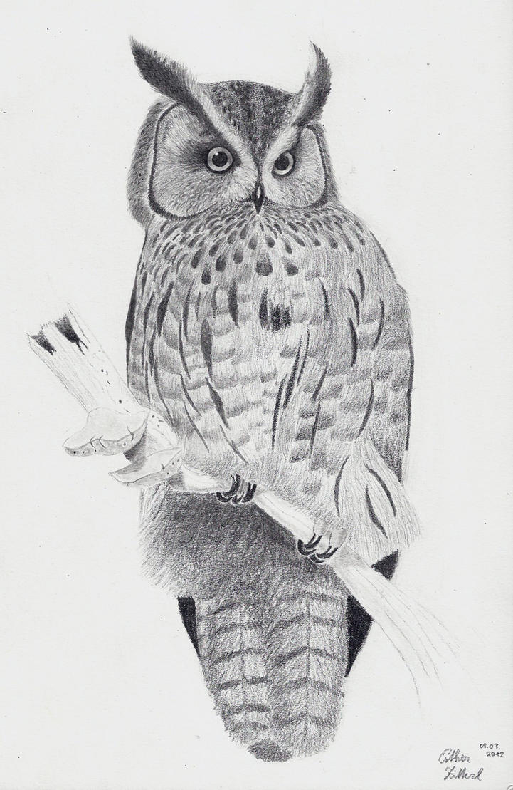long eared owl by xcxninuixcx on deviantart