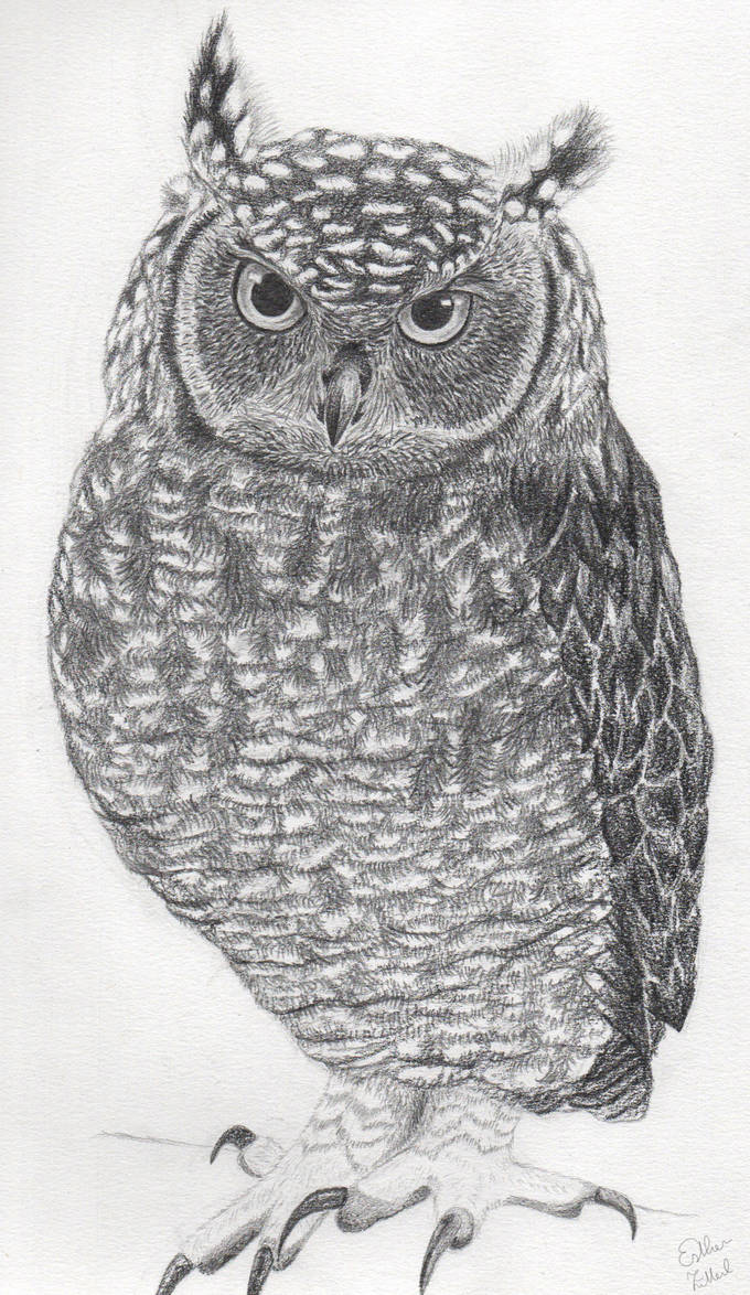 Owl by xcxNinuixcx
