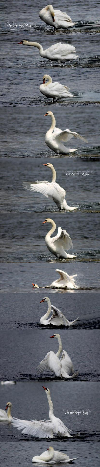 swan gymnastics by declaudi
