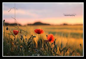 Poppy Landscape by declaudi