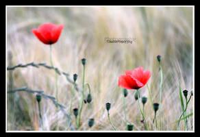 Poppy as a duo by declaudi