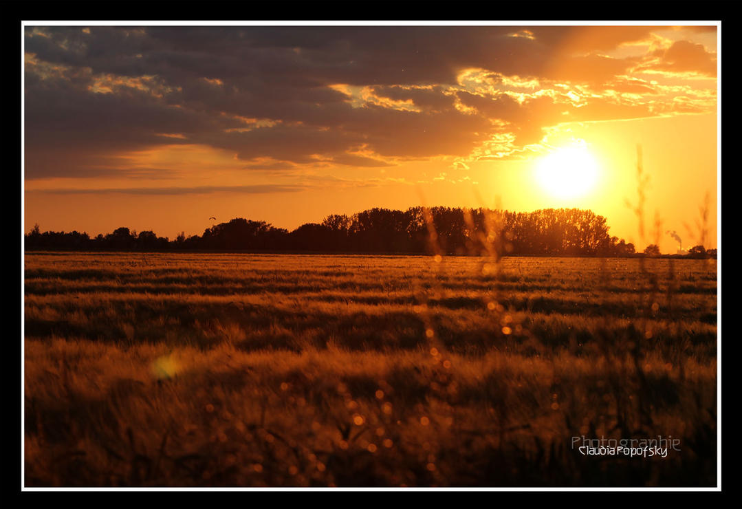 golden Sunset by declaudi