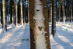 Winter Wonderland by BenjiiBen