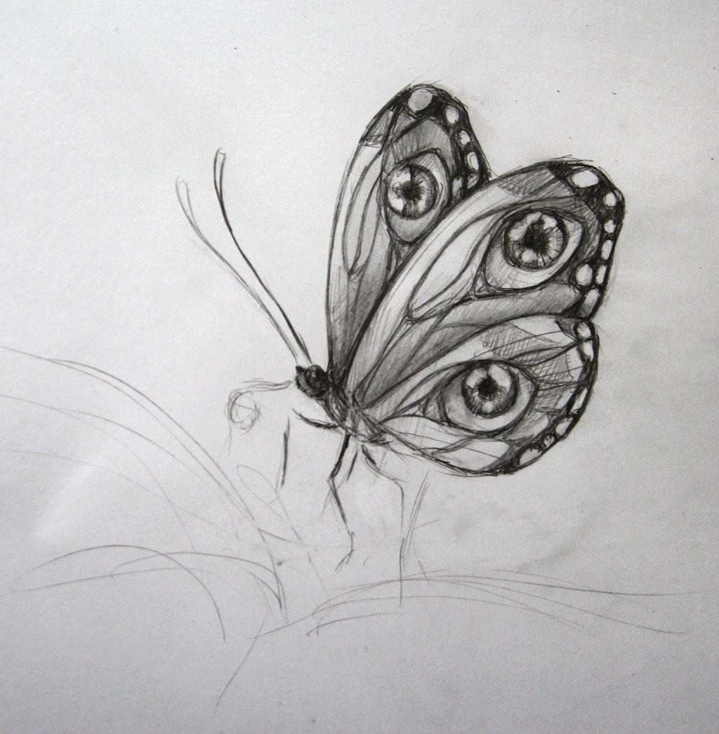 Butterfly Sketch by BenjiiBen on DeviantArt