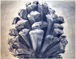 pinecone charcoal drawing by meekssandygirl