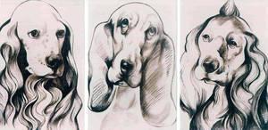 Dogs by Muti-Valchev