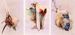 shells by Muti-Valchev