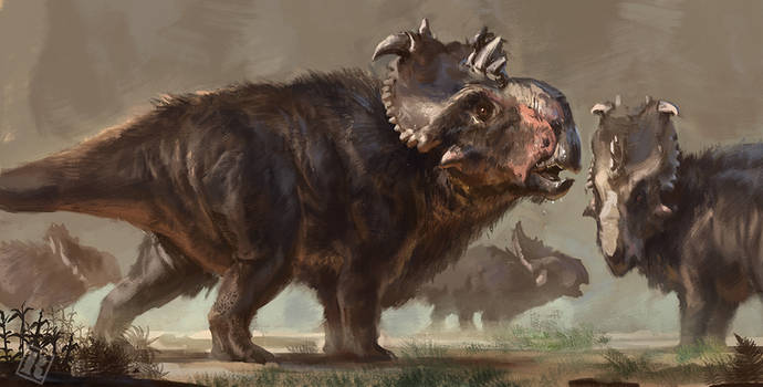 Pachyrhinosaurus speculative coat