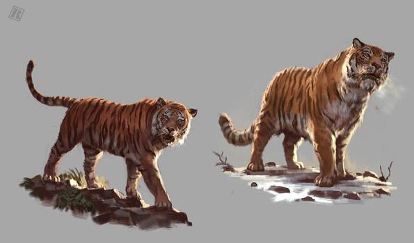 Bengal and Siberian Tiger study