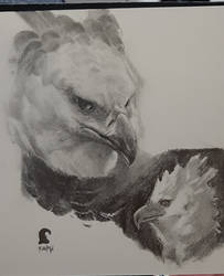 Harpy eagle sketch