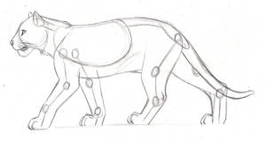 Feline Anatomy Study - Tiger