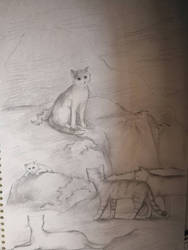 A sketch of some cartoon cats