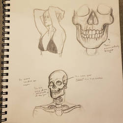 Anatomy Sketch 1 by eKnick14