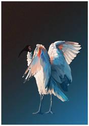 Australian White Ibis - Breath