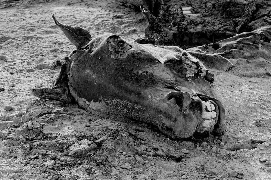 dead_horse_by_alnemer.jpg