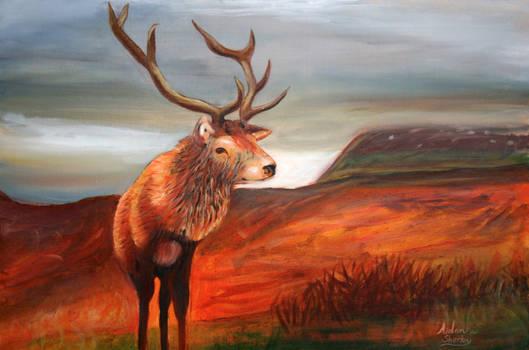 Donegal Red Deer