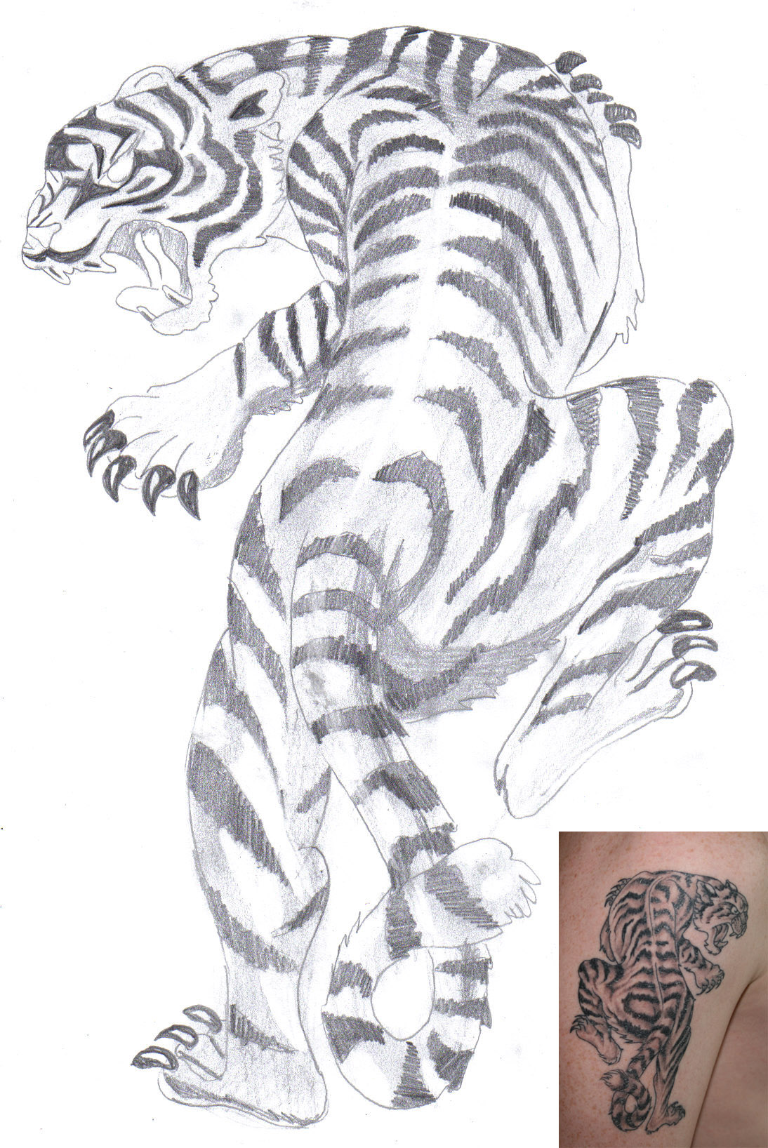 White tiger tattoo by aidan8500 on deviantart for White tiger tattoo