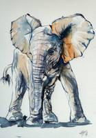 Elelphant baby by kovacsannabrigitta