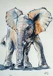 Elelphant baby