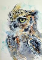 Owl by kovacsannabrigitta