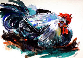 Rooster resting